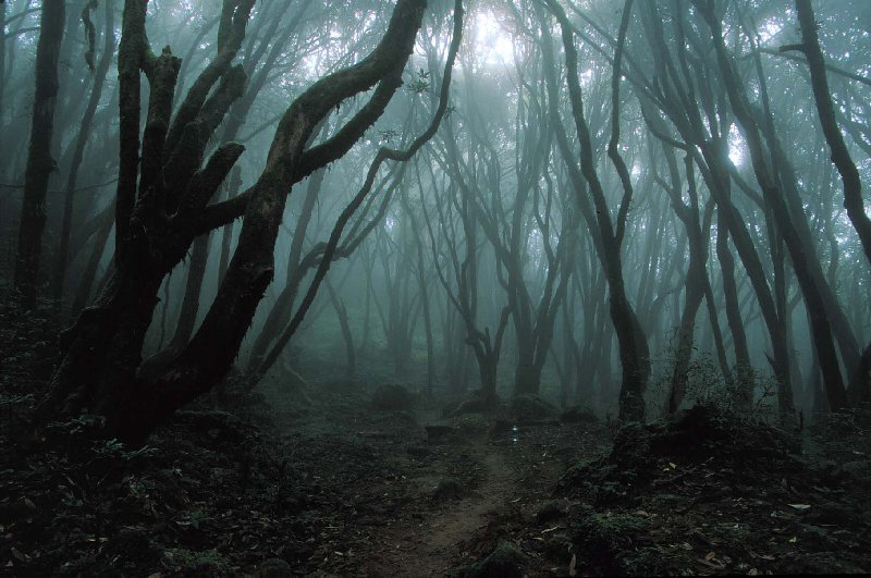 creepy_woods2